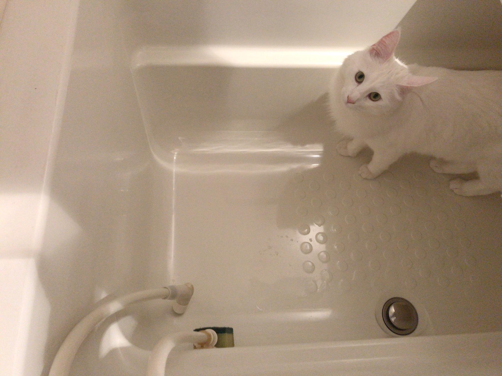 ねこ ネコ 猫