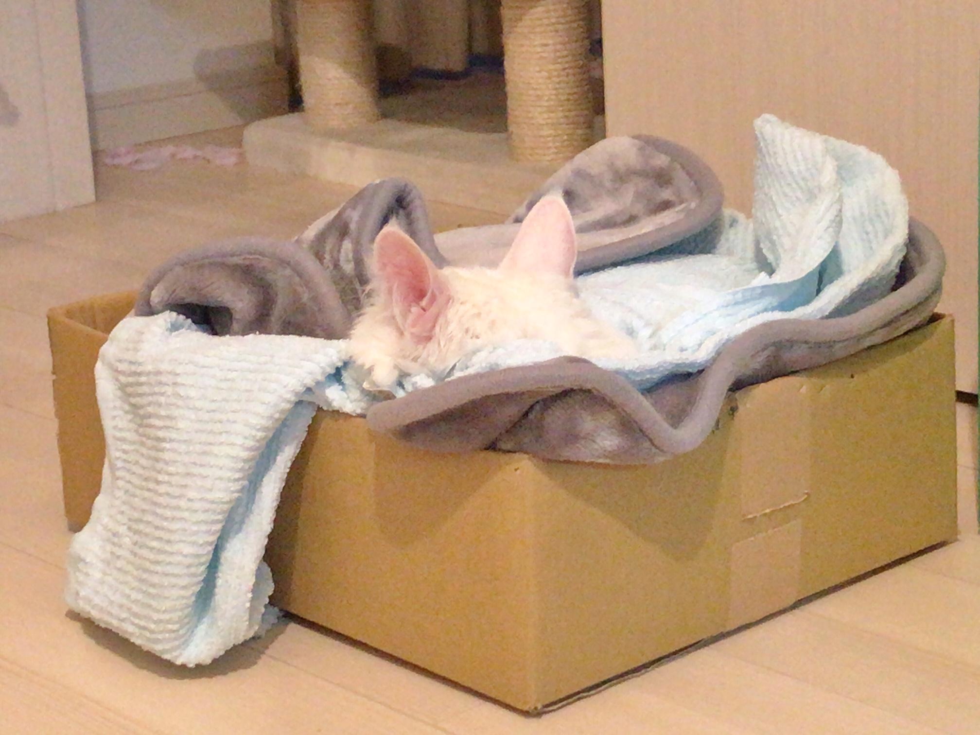 ねこ 猫 ネコ