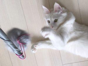 ねこ 猫 ネコ おもちゃ