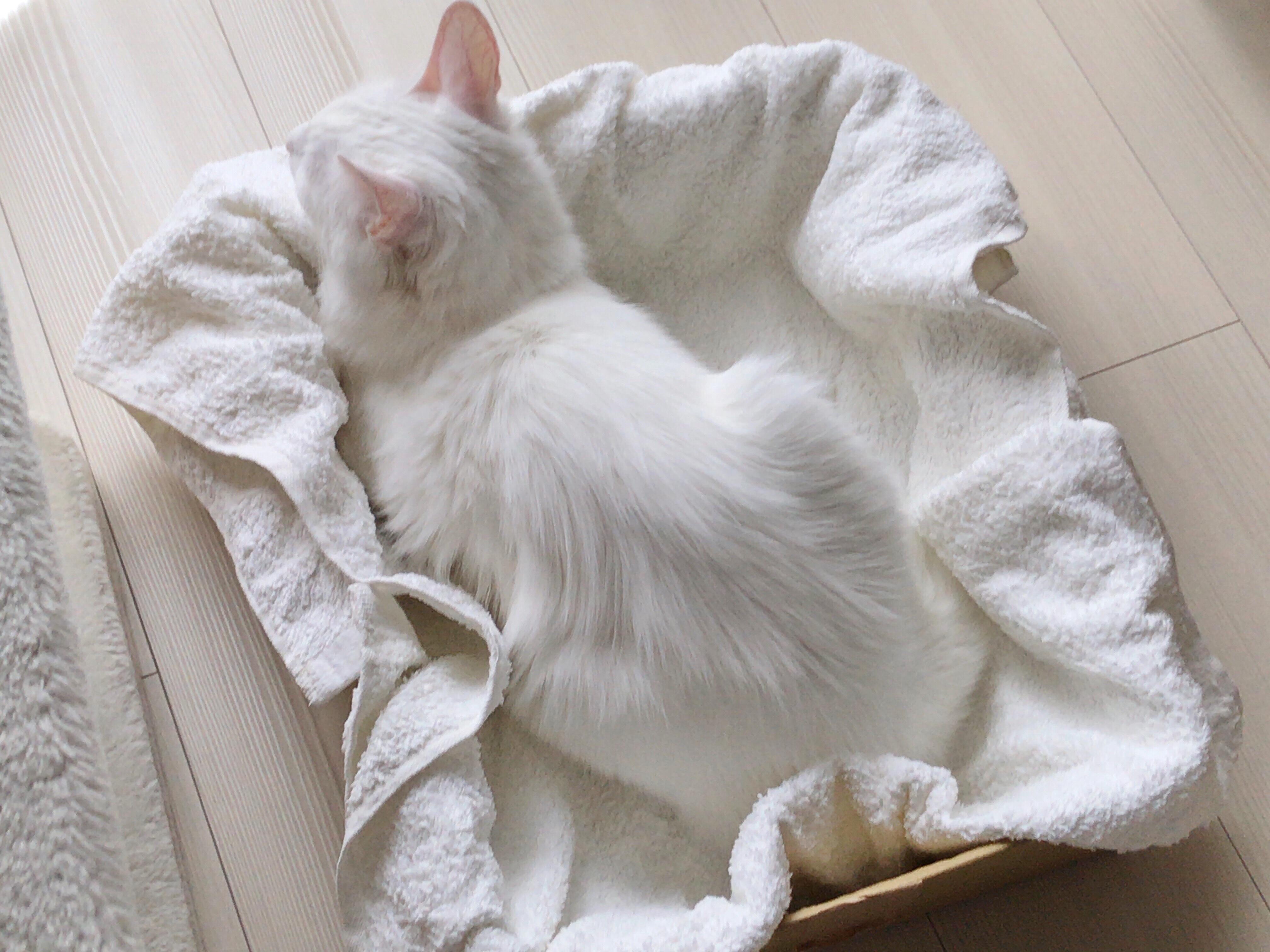 ねこ 猫 ネコ たんぽぽ